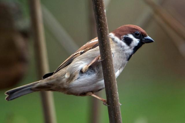 Vögel leben immer häufiger in Dörfern und Städten