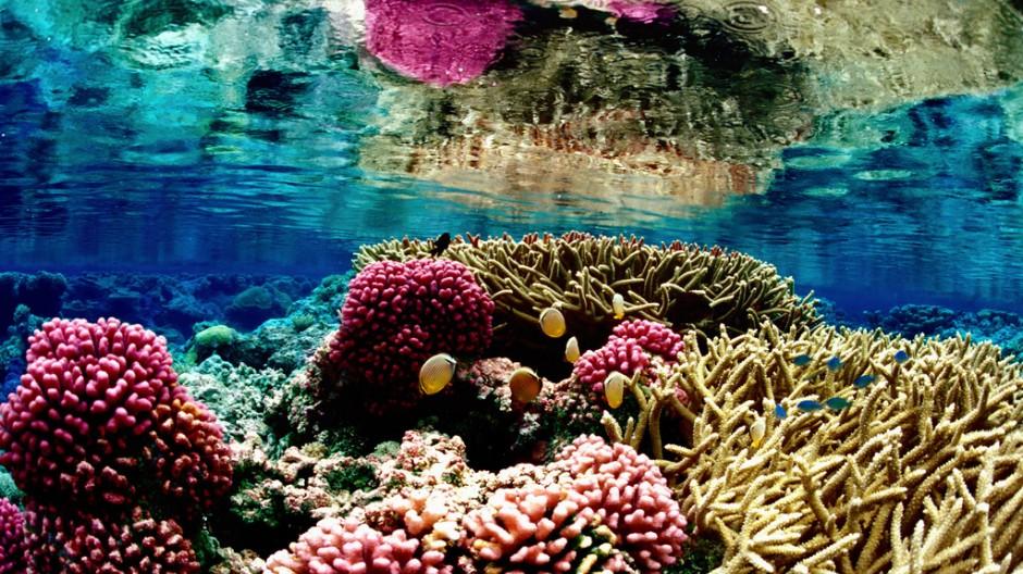 Überfischung der Meere Pazifik