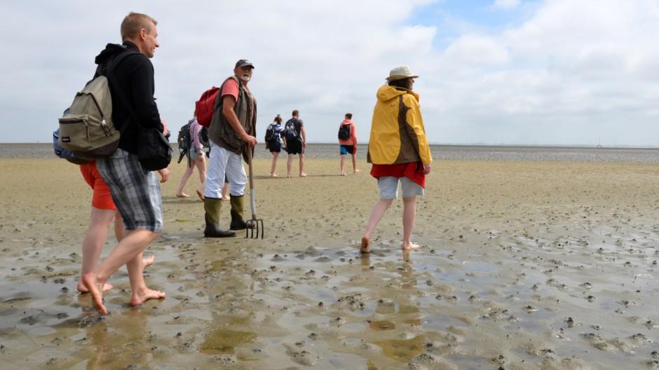 Seepferdchen im Wattenmeer - Wangerooge ist die Insel ganz rechts