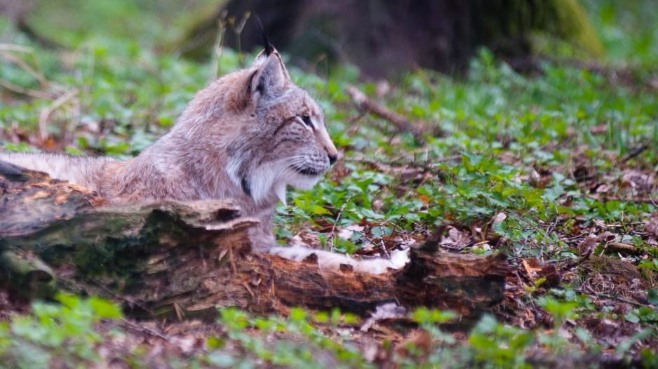 Artenschutz Artenschutz