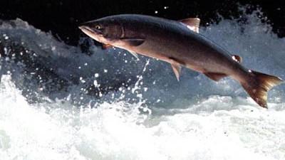 viel Fisch Kanada Login