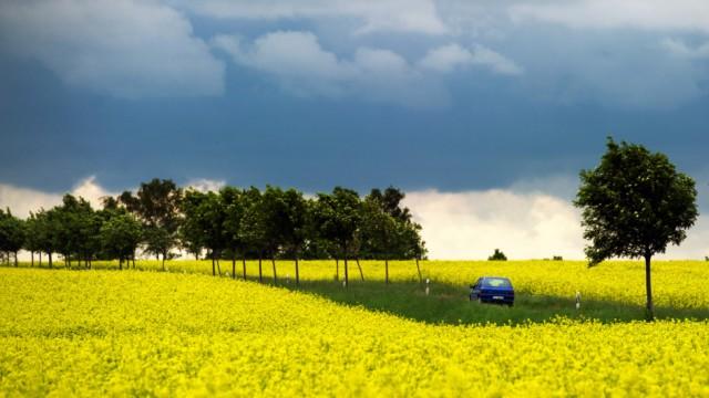 EU-Agrarreform - Rapsfeld