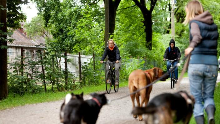 Frau Sorina Szeli, Hundetrainerin und Gassigeherin bei der Hundebetreuuung Olympiapark mit fünf Hunden Im Olympiapark auf Wegen, wo Radfahrer unterwegs sind, um Begegnungen zu provozieren, bzw. sowohl Hunde, als auch Radfahrer aufs Bild zu bekommen.