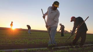 Mexikanische Arbeiter Nafta