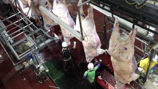 Cargill employees sever the heads of cattle at the Cargill Beef Processing Plant in Schuyler