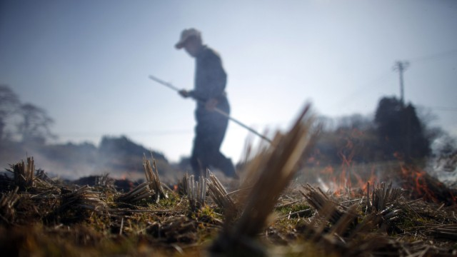 A man burns a rice field in preparation for planting near Fukushima, northern Japan