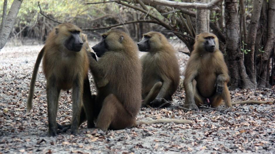 Primatenforschung Primatenforschung
