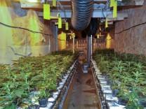 Cannabisplantage von Polizei entdeckt