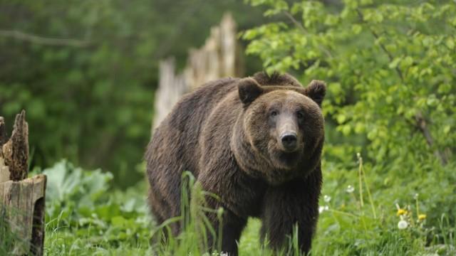 Zoo Debatte um artgerechte Haltung