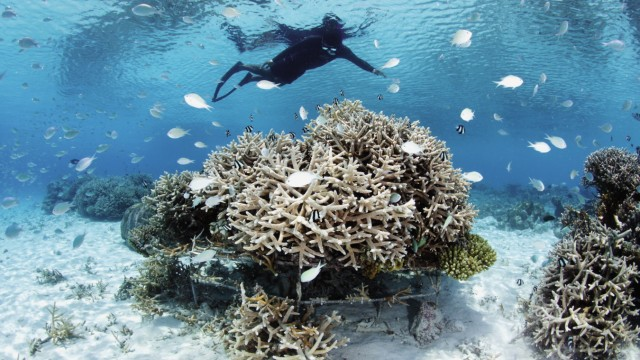 Korallenriff auf den Malediven