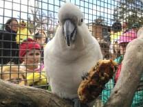 Greiser Kakadu Fred feiert Geburtstag