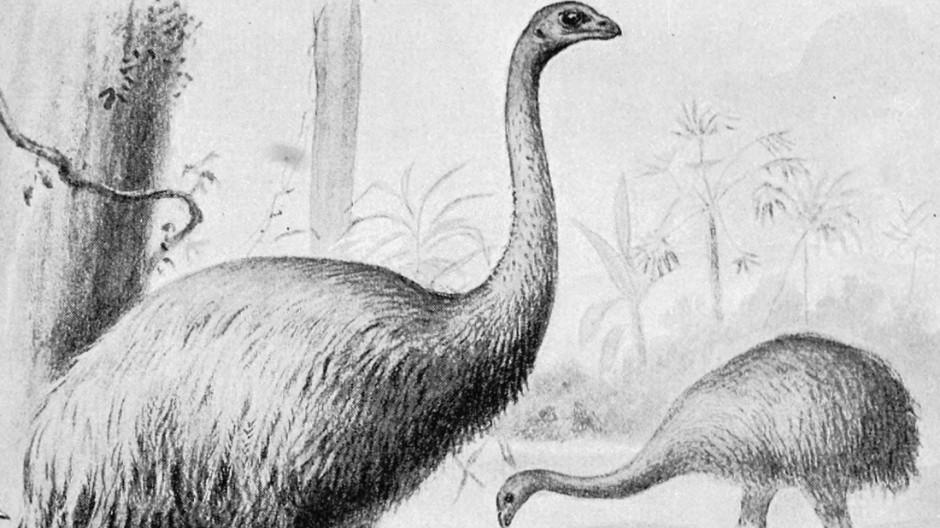 Artenschutz Ausgerotteter Vogel