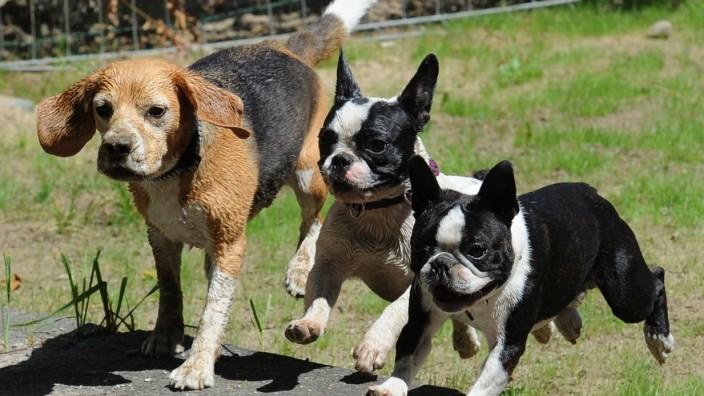 Wirtschaftsfaktor Haustiere