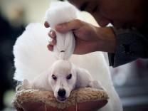 Internationale Haustierschau in China