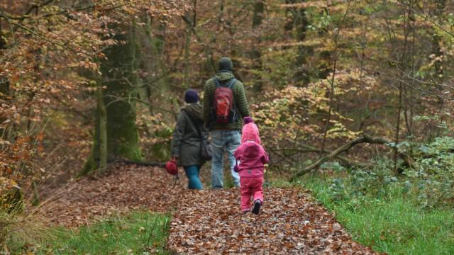 Herbstlicher Urwald