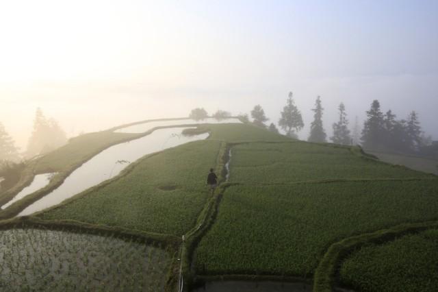 An ethnic Miao woman walks through a field in morning fog in the village of Basha, Congjiang county