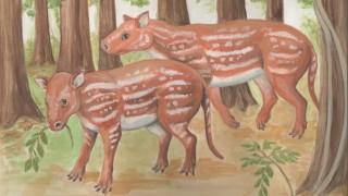 Ursprung der Pferde in Indien
