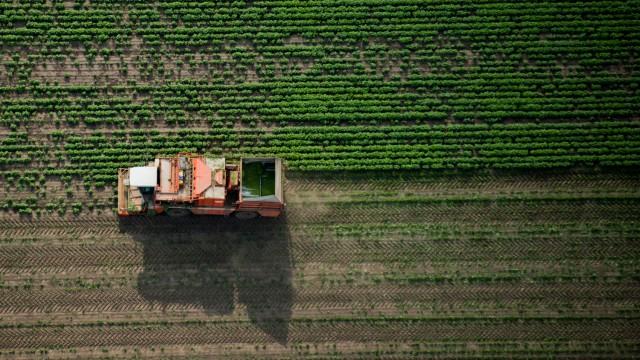 Bohnenernte in Niedersachsen