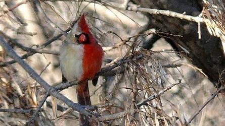 Vogelkunde Vogelkunde
