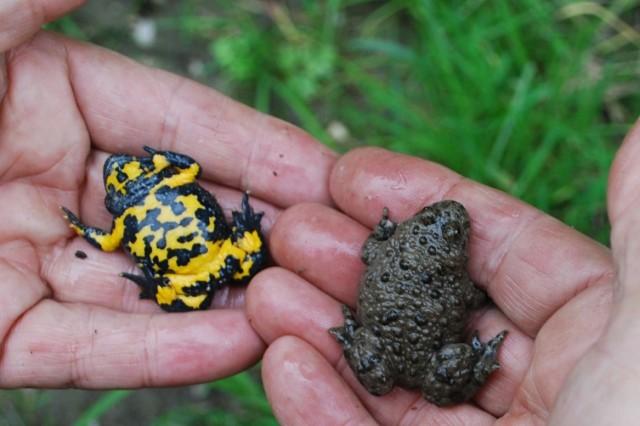Ein Beitrag zur Biodiversität.