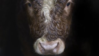 After European Wide 16 Year Ban US Green Light Irish Beef