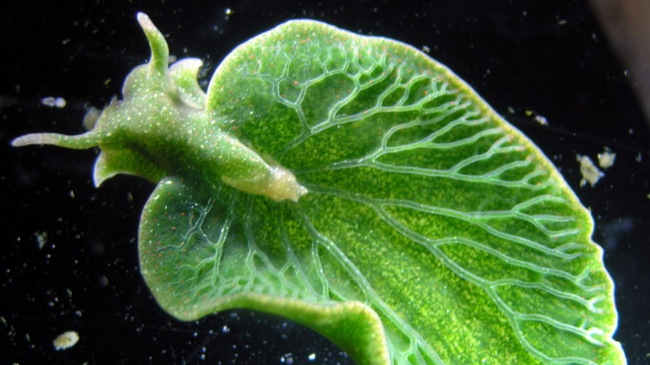 Meeresbiologie Meeresbiologie