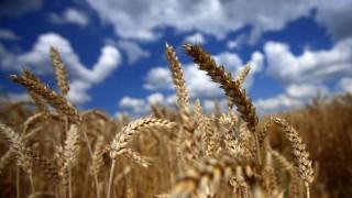 Landwirtschaft in MV