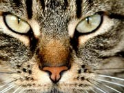 Katzenkrieg auf Mykonos Foto: iStock