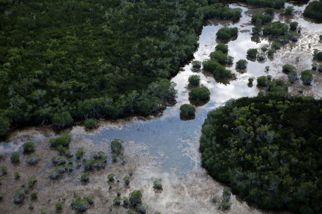 Poaching And Climate Change Threaten Endangered Plants In Everglades