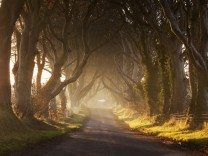 "The Dark Hedges, Nordirland, ""Game of Thrones"" - Drehort"