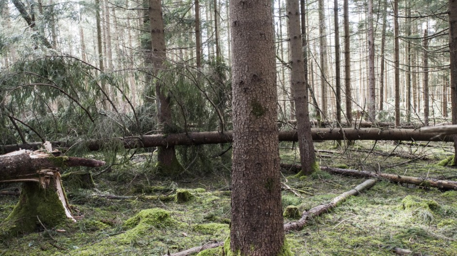 Oberhaching, Sauerlach, im Wald nach dem Sturm,