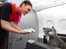 koala-qantas-2-data