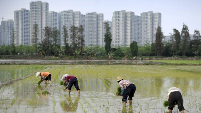 Farmers plant rice seedlings in a field near a residential compound in Shaxi township