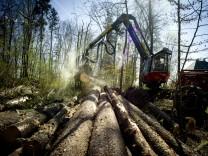 Pullach: HARVESTER beim Wald Aufräumen in Höllriegelskreuth