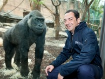 Zoo-Direktor Rasem Baban mit Gorilla Sonja im neuen Affenhaus