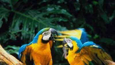 Peru: Dschungeltour (SZ)