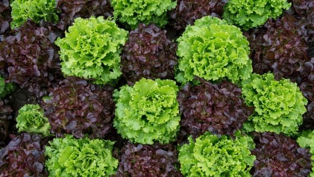 Vertikaler Garten Salat Von Der Empore Geld Süddeutschede