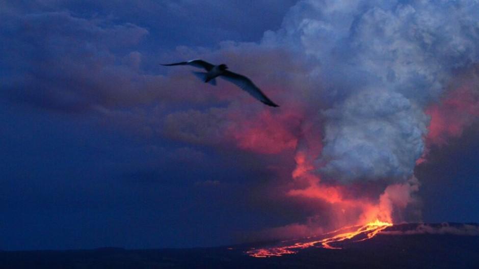 Vulkanausbruch Galápagos Inseln