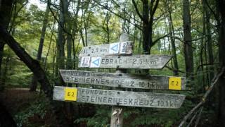 Buchenwald bei Handthal im Steigerwald, 2014