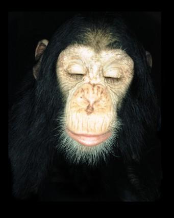 Affen fürs Wissen