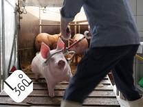 Tiere töten
