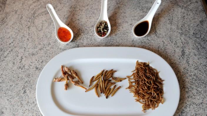 Würmer, Larven und Heuschrecken zum Essen