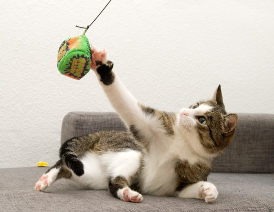 Von Korb bis Kratzbaum: Neun Basics für die Katze
