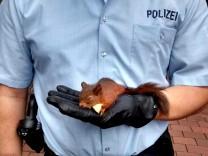Eichhörnchen weicht Passantin nicht von der Seite