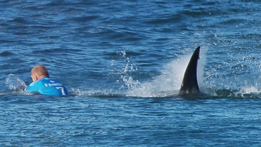 """""""Kokosnüsse sind gefährlicher als Haie"""""""