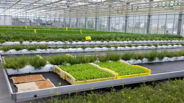 Urban Gardening Urban Gardening