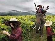 Wein aus Asien