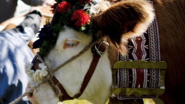 Tierschützer fordern Verbot von Kuhglocken