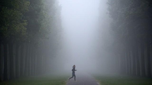 Nebel in der Karlsaue