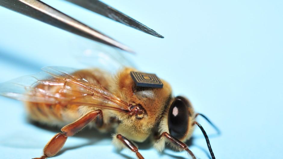 Süddeutsche Zeitung Wissen Mikrochips für Insekten
